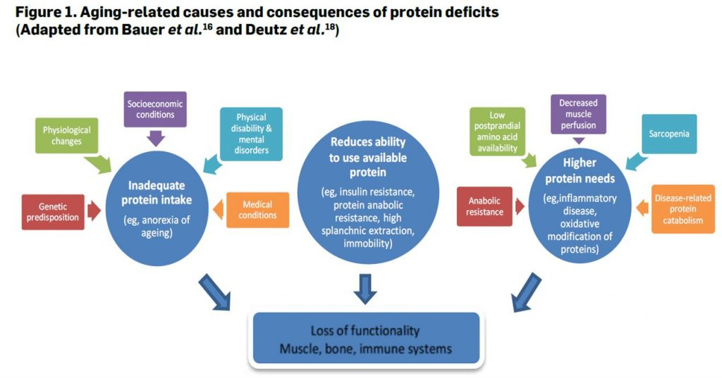 Figure 1 - Protein requirements and oral nutritional supplementation