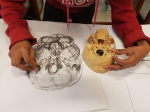 Student making anatomical drawing of skull at UCT